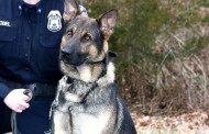 4 police officers complete K-9 training in Prince William