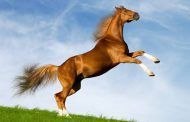 """""""Help a Horse"""" Day event in Manassas, April 24"""
