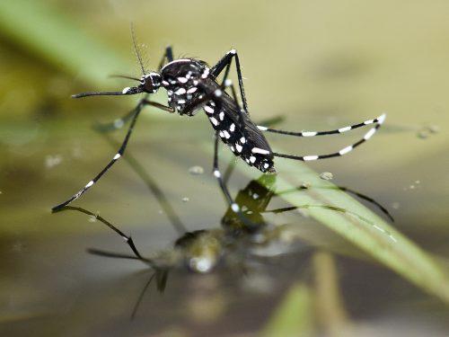 Prince William explains mosquito spray method, pest management