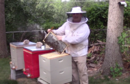 Get the buzz on this Green Beret's beekeeping business, Sweet Sophia