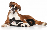 County hosting free workshops on pet ownership, adoption in Woodbridge