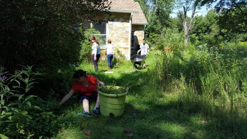 Volunteers needed for invasive plant removal near Woodbridge dog park tomorrow