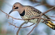 Prince William Conservation Alliance hosting Christmas Bird Count, Dec. 26