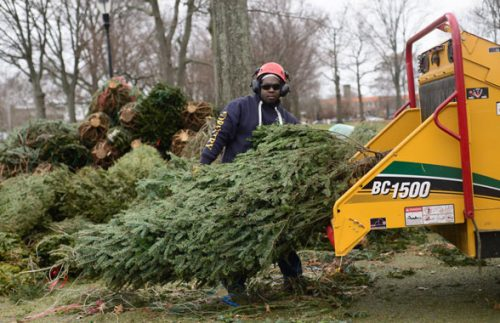 Here's how you can recycle your holiday greenery in Prince William