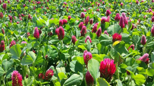 Classes on sustainable gardening tomorrow in Manassas