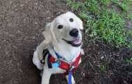 """Prince William animal shelter hosting """"Clear the Shelters"""" event, Aug. 19"""