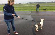 120 pets arrive at Manassas Airport, in the aftermath of Hurricane Harvey
