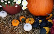 Fun Halloween activities for children, SERVE needs pumpkin donations