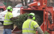 Here's where you can recycle your holiday tree in Prince William