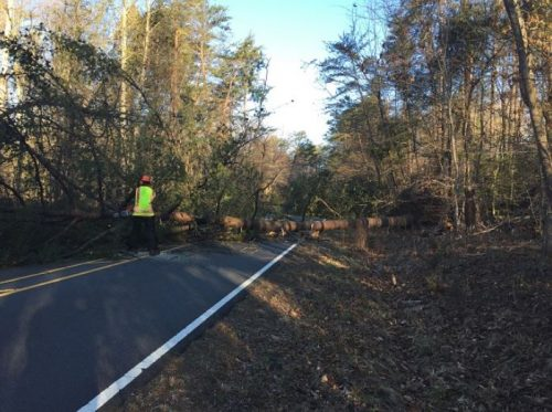 Prince William Forest Park temporarily closed due to wind damage
