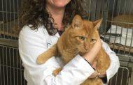 VCA Woodbridge Animal Hospital connects Florida man with missing cat