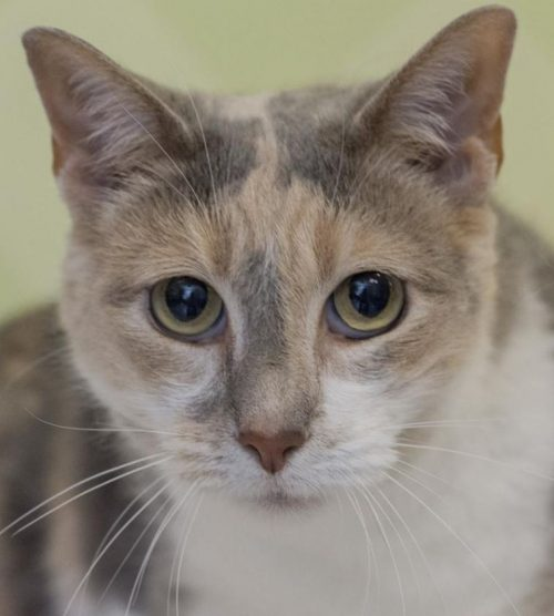 Prince William County Animal Shelter seeks homes for cats