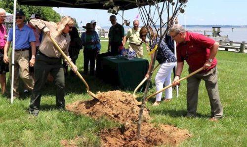 Woodbridge Rotary Club donates trees to Leesylvania State Park