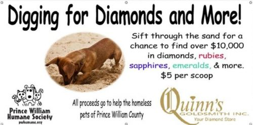 Quinn Goldsmith partners with humane society for Woodbridge event