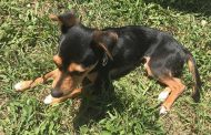 Summer safety tips for pet owners from Prince William County