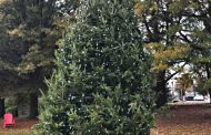 City of Manassas beginning holiday season with new tree