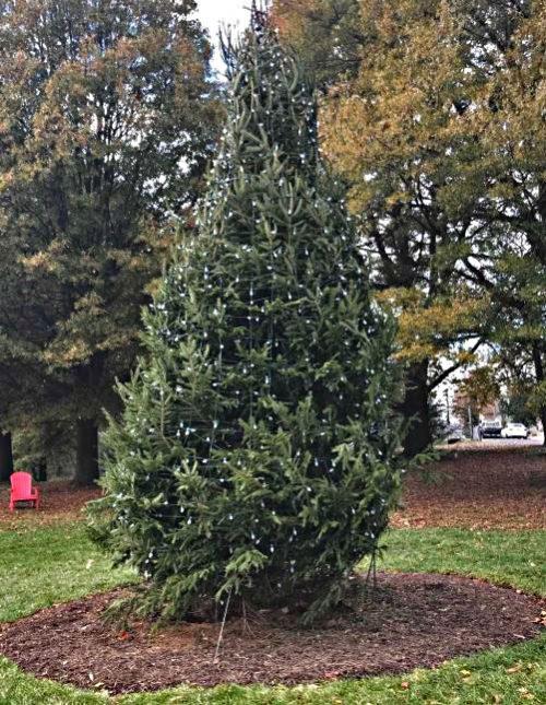 City of Manassas beginning holiday season with new tree
