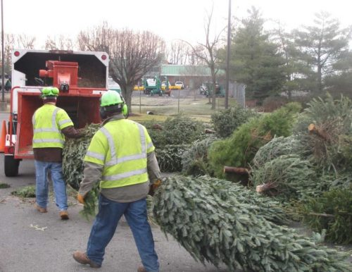 Christmas tree recycling options available in county