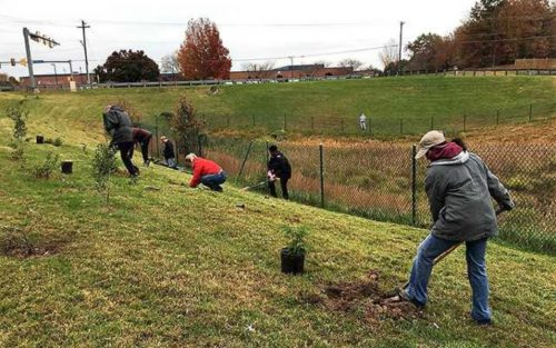 Reforestation project brings greenery to county
