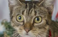 Discounts to be offered at pet adoption event, Feb. 14 - 17