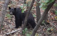 Bear safety tips from county police department
