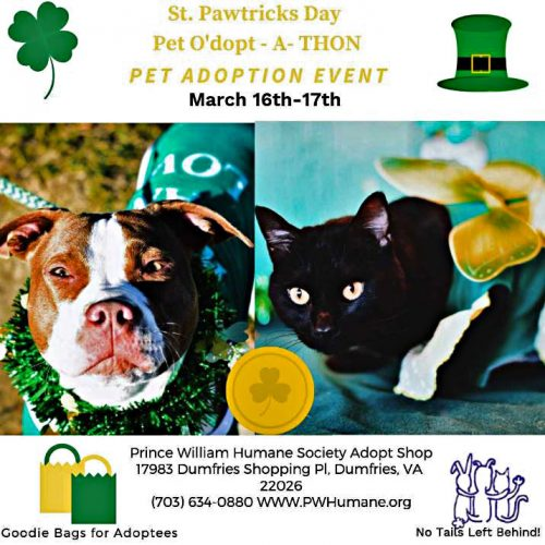 St. Pawtricks Day adoption event scheduled for March 16 - 17