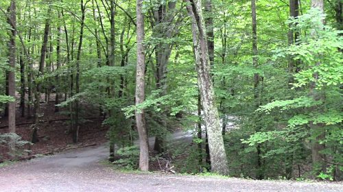 Trails may be added at Prince William Forest Park
