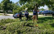 Career firefighters remove tree from Woodbridge road