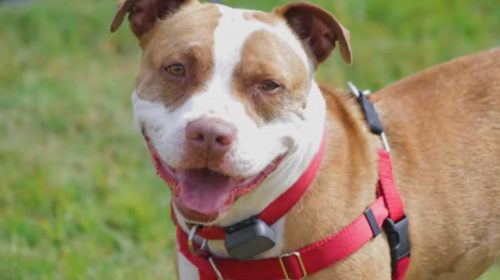 Meet Kalvin from the Prince William Humane Society