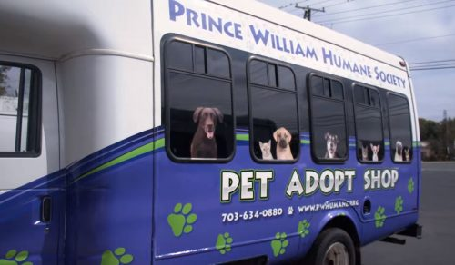 Paw Bus being revealed at Humane Society fundraiser