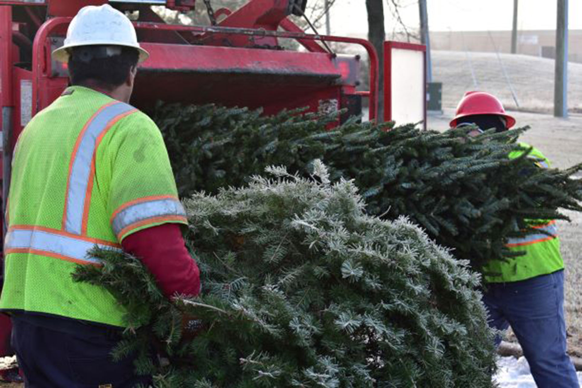 Recycling available for trees, wreaths